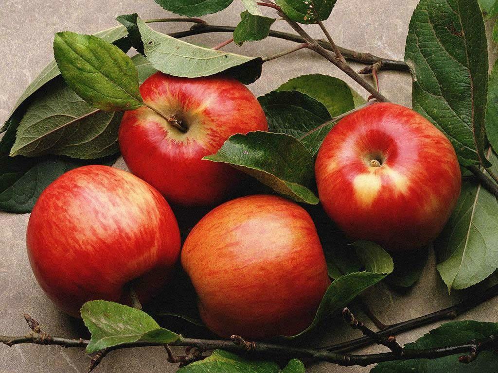 belle-pomme-fond-d-ecran-flora